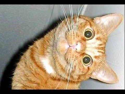 Lustige Katzen Video