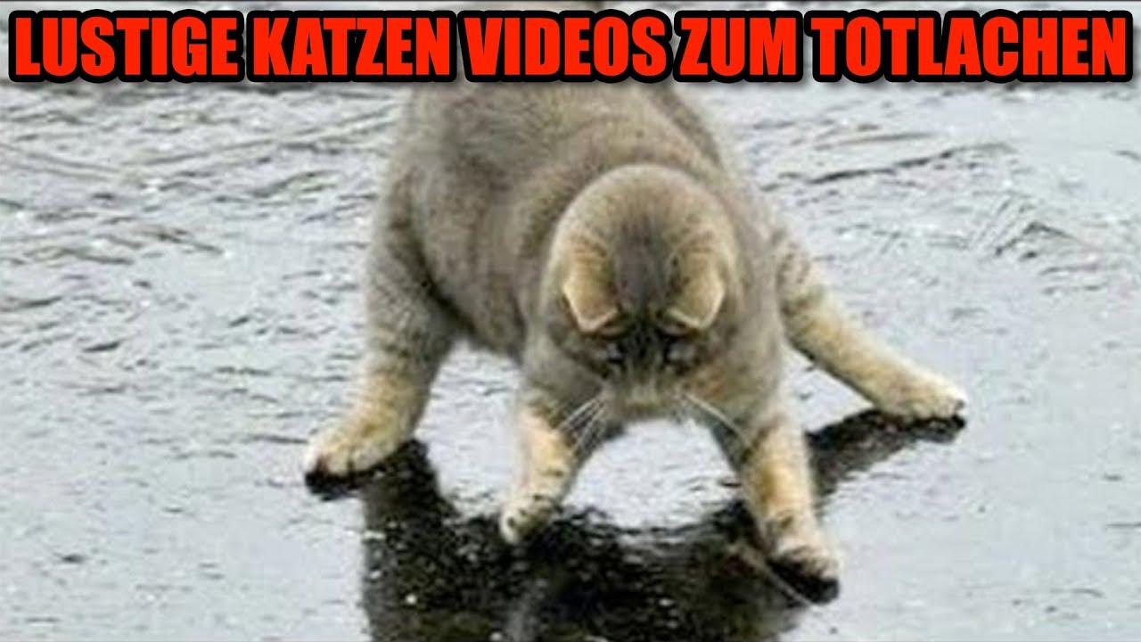 Katzenvideos 2020